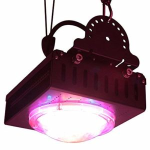best cob led grow light