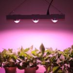 Top 5 Best Cob LED Grow Lights Reviews