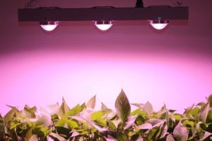 cob led grow lights